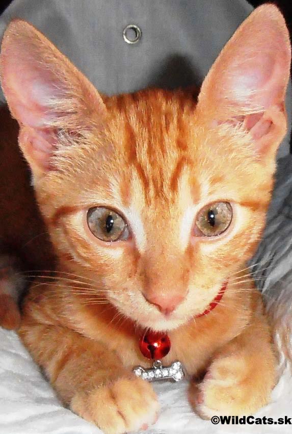 Bratislavčanov zbavovali stresu mačiatka: Mňau, chcete sa pomaznať?