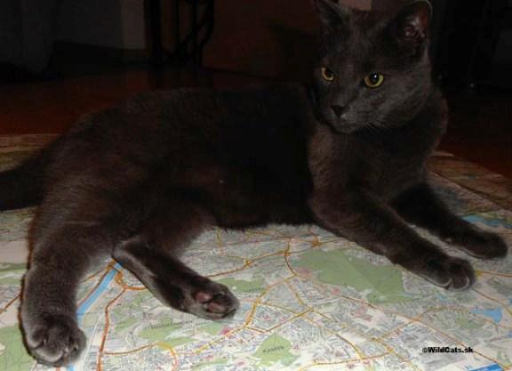 FOTOREPORTÁŽ: Mačky z Terezína