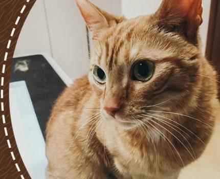EKO úklid v domácnosti s kočkami