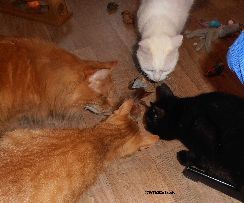 Keď jedna mačka (ne)stačí.
