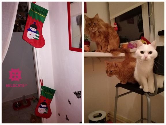 mačky čakajú na Mikuláša