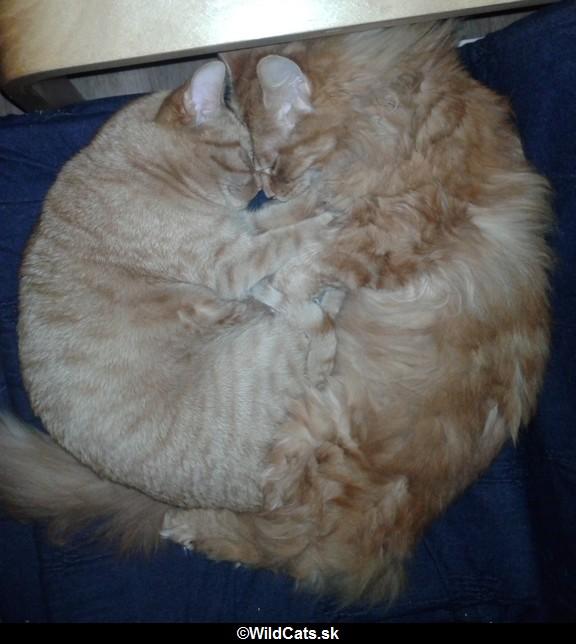 Mačky sú (len) zvieratá