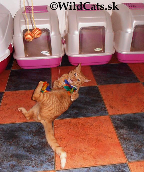 OTÁZKY&ODPOVEDE: Mačiatko močí do postele a útočí na nás