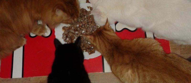 Mačacie diéty