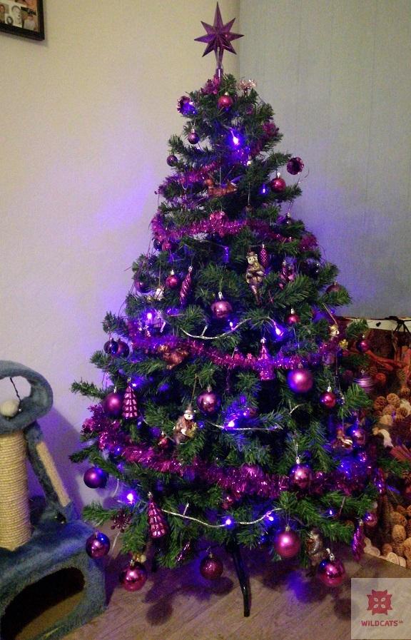 Vianočné sviatky s mačacím kvartetom BLRA