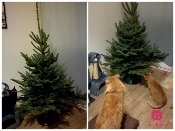 mačky sa zoznamujú s vianočným stromčekom