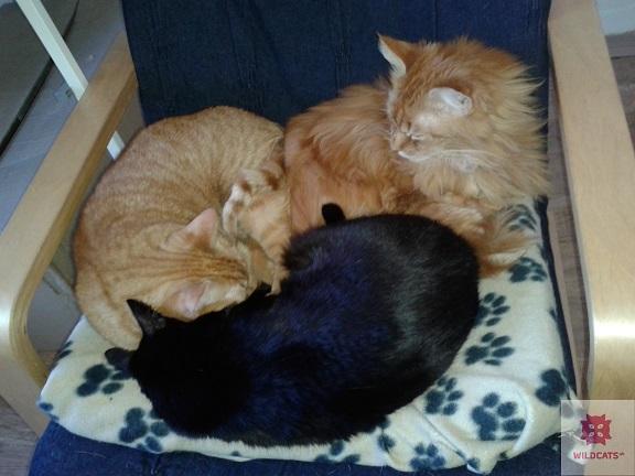 Lepkaví pomocníci v boji proti mačacím chlpom v domácnosti