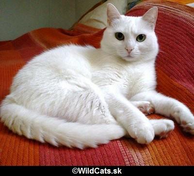 Aha.cz prináša výber mačacích rekordov