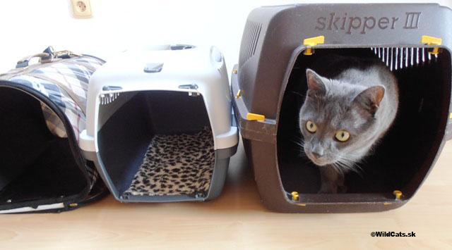 Sťahovanie ako stresová a záťažová situácia pre mačky