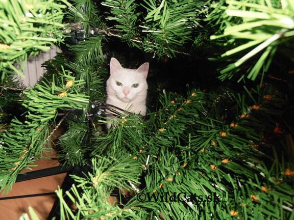 Jingle Cats 2015 prinášajú renovovanú verziu známeho hitu Jingle Bells