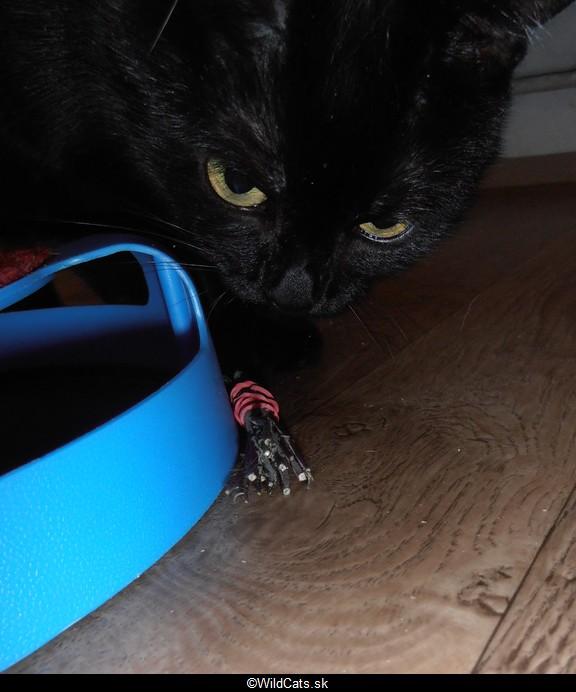 Lola a sušený catnip