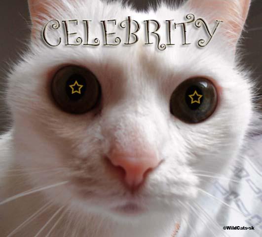 Katy Perry posadnutá mačkami!