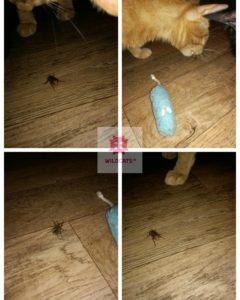 chrúst hmyz robin