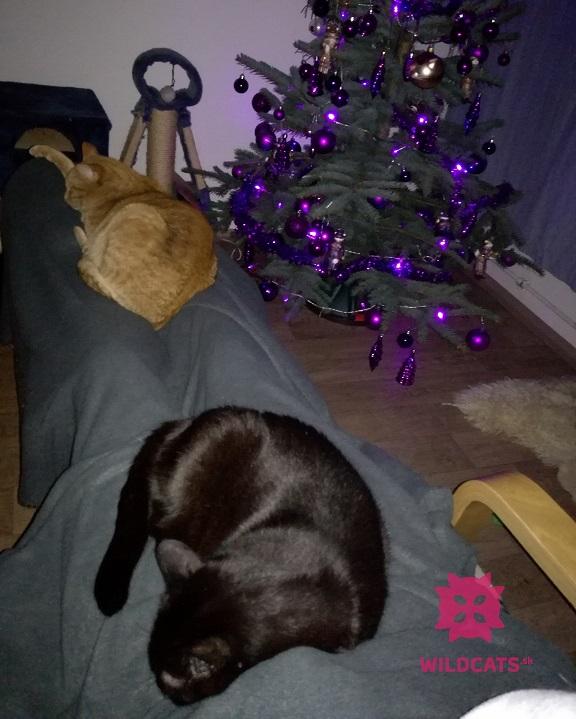 ja a mačky