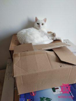 Sťahovanie ako stresová a záťažová situácia pre mačky II