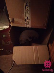 Bella v krabici
