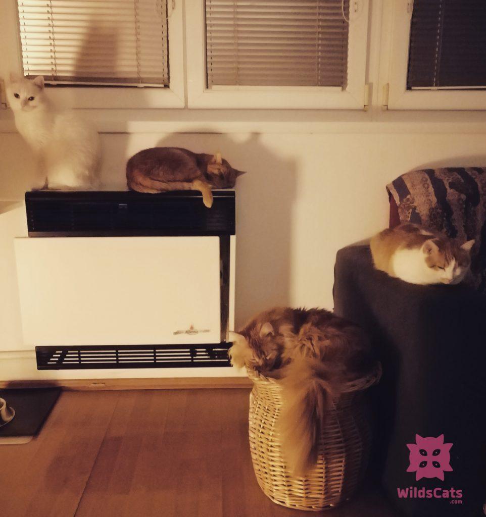 kočky doma