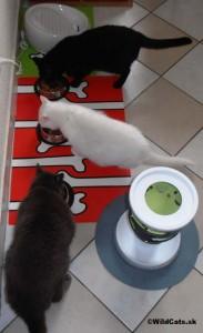Kollby , Bella a Lola papajú mäsovú zmes z misiek