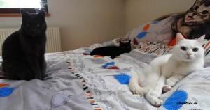 Kollby & Bella & Lola relaxujú na posteli