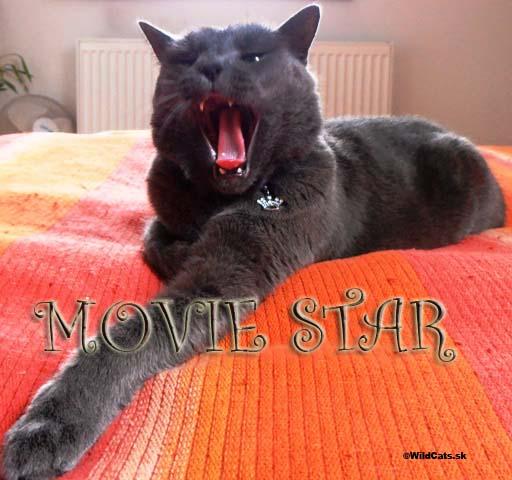 Kollby a la movie star