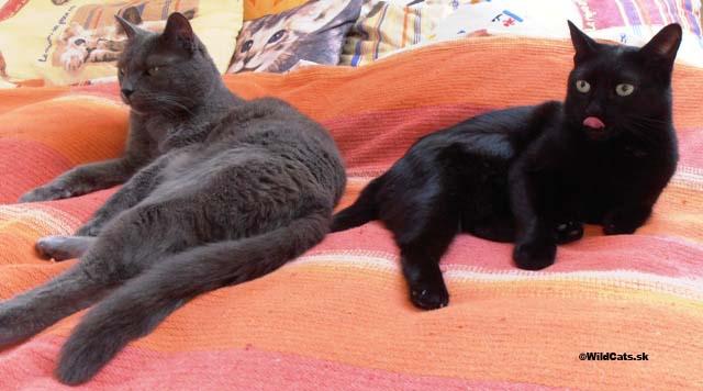 Kollby a Lola relaxujú na posteli