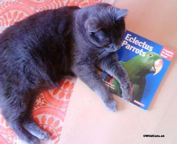 Recenzia knihy: Chováme mačky