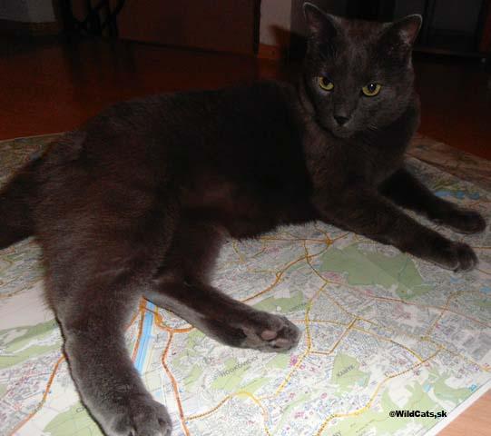 Mačky a mačkovité šelmy z Bazileji a Neuenburgeru