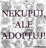 AKTUÁLNE:  9.12.2012 Výstava opuštěných koček Praha