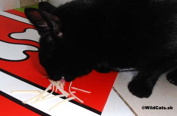 mliečne výrobky vo výžive mačiek