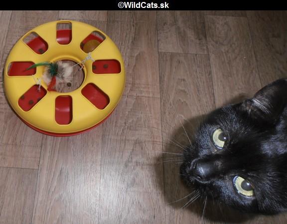 hračka pre mačky
