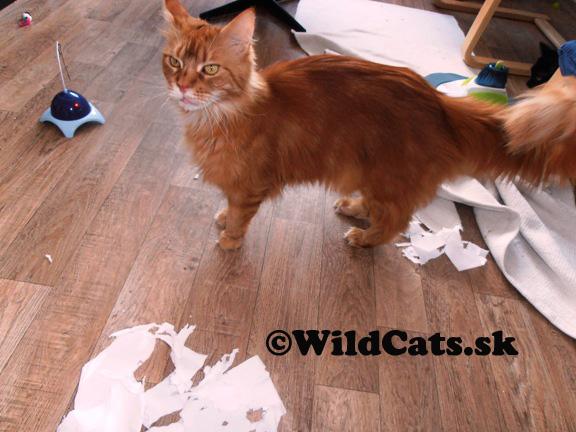 Skvelý pomocník v domácnosti s mačkami – vysávač