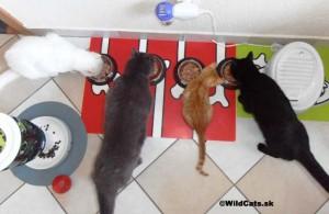 Všetky mačky spolu pri večeri