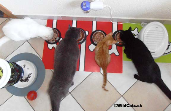 Chutné maškrty, odmeny a doplnková strava pre mačky