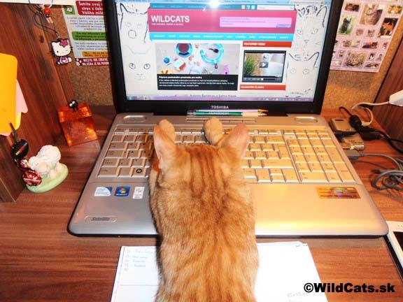 Mačací prehliadač či tapeta – dnes už žiadny problém