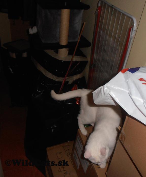 sťahovanie s mačkami