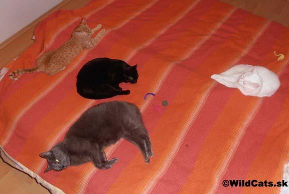 So štyrmi mačkami som sa prepočítal, alebo ako treba myslieť na horšie časy