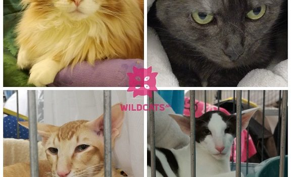 Mezinárodní výstava koček Zdice 20.- 21. října 2018