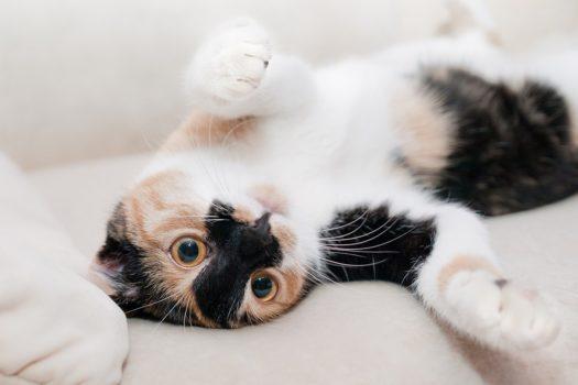 Máte doma šťastnou kočku?