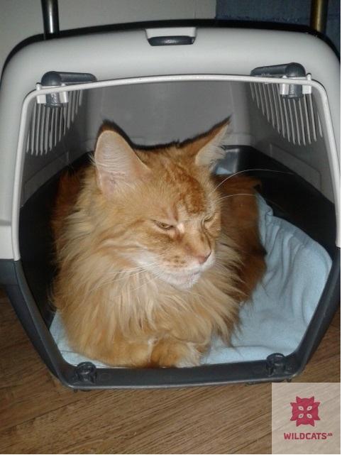Pomôcky na prepravu mačiek