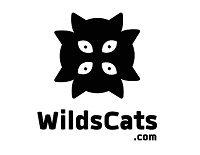 WildsCatsBlog