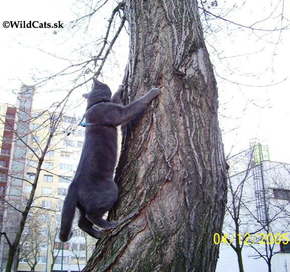 šedý kocúr na strome