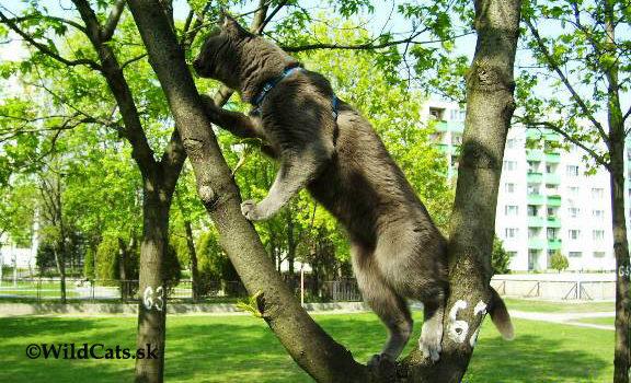 Na čo si každá mačka musí v lete dať pozor?