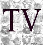 AKTUALITA: Príbeh týraného kocúrika Hajka z Túlavej Labky