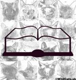Recenzia knihy: Něžní obři z Ameriky od Ivany Andržovej