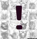 PETA ponúka štedrú odmenu za informácie vedúce k dolapeniu mačacieho rozparovača