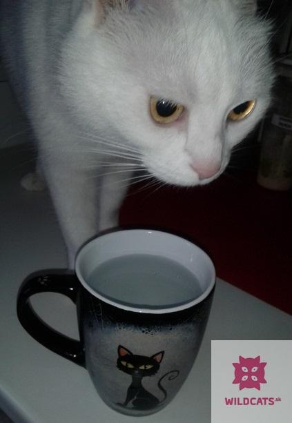 REPORTÁŽ: Kočkafé Freya – kaviareň plná mačiek na Žižkově v Prahe