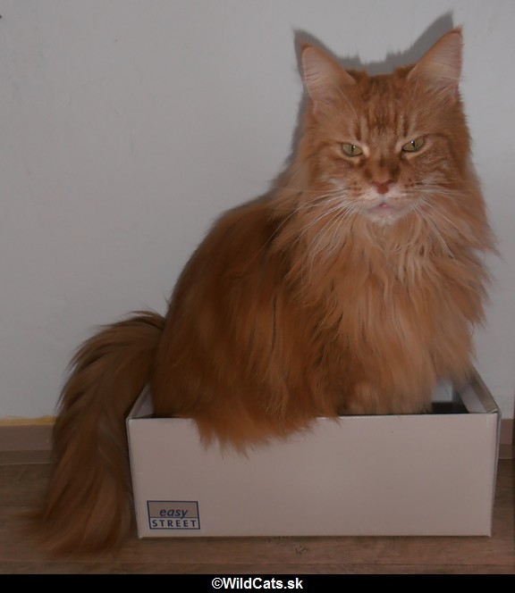 papierová krabica na topánky - hračka pre mačky