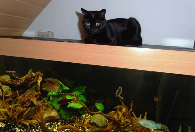 Lolinka odpočíva na teplom kryte akvária