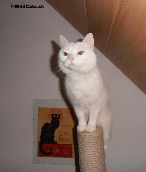 škrabadlo pre mačky