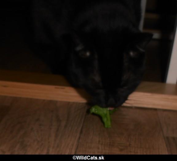 zelená strava